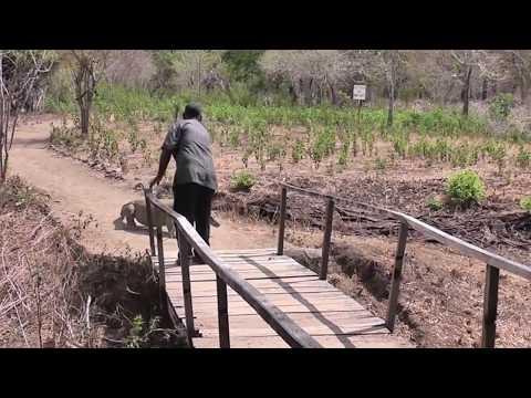 close encounter with the Komodo dragon