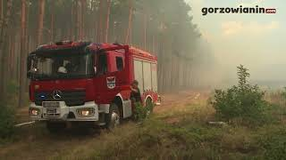 Pożar lasu pod Gorzowem