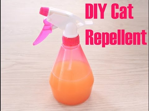 DIY CAT REPELLENT