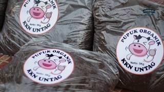 Pembuatan Pupuk Organik Dahsyat Untuk Buah Dan Tanaman
