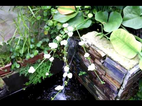 Break through in koi pond water quality doovi for Koi pond water quality