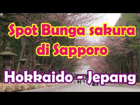 Wisata Jepang : Menikmati Sapporo di spot bunga sakura di Sapporo Hokkaido041 Moopon