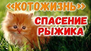 НАХОДКА И СПАСЕНИЕ КОТЕНКА-РЫЖИКА ❖ КОТОЖИЗНЬ! 10.09.2017