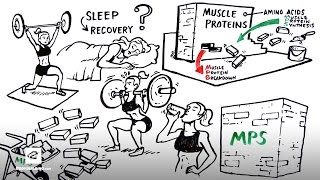 Micellar Casein Protein for Sleep Recovery | Ascent Protein