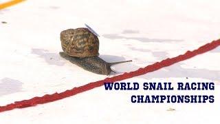 World Snail Racing Championships 2018