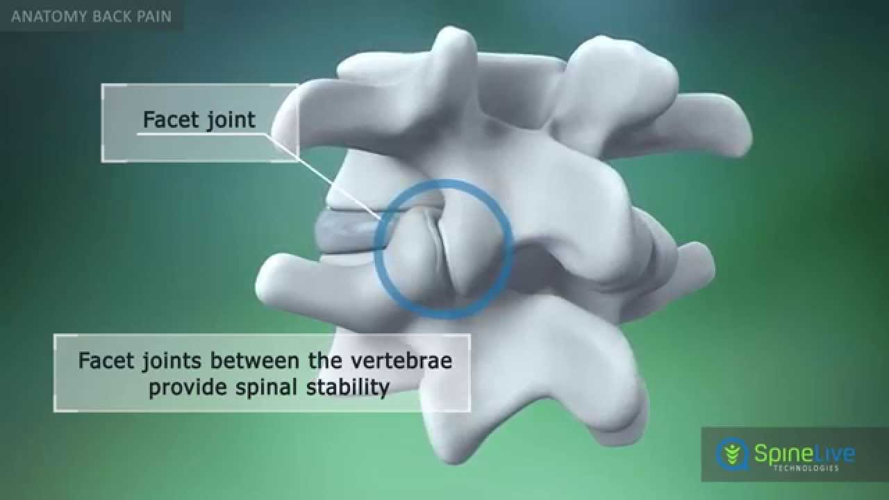 Back Pain Anatomy - YouTube