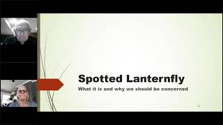 Spotted Lanternfly | The Latest Information