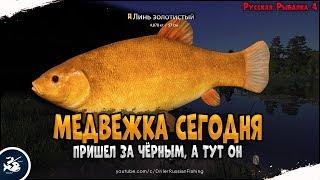 За Амуром Чёрным на Медвежку Ждем трофейного черныша Driler Русская Рыбалка 4