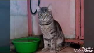 Небольшой фильм о кошках