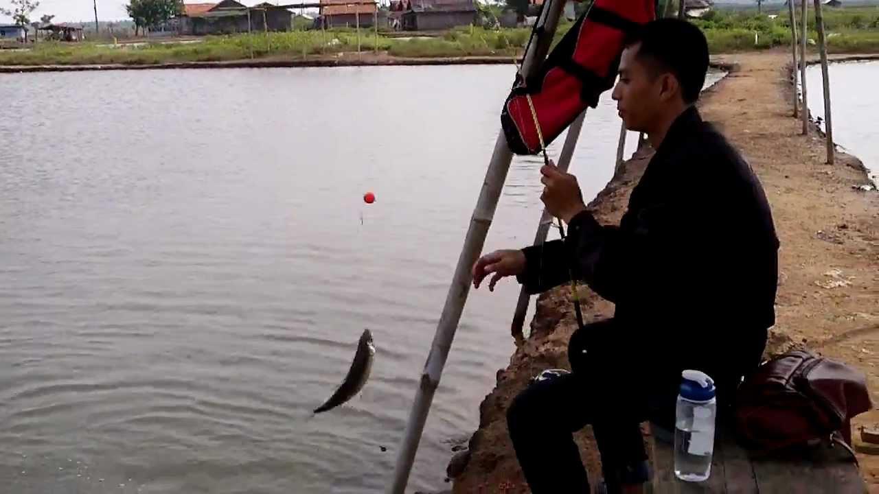 Mancing Bandeng Milk Fish Di Tambak Pak Salam Bosem Wonorejo Surabaya By Gogofishing