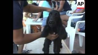 Cuban Dog Lovers Show Off Their Pampered Pets At Dog Show