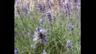 Jane Maluka Sights & Sounds of Nature - Save The Bees - Save Your Food Supply - Save Nature