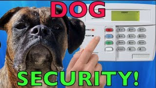 Brock The Boxer Dog: Dog Security System!!