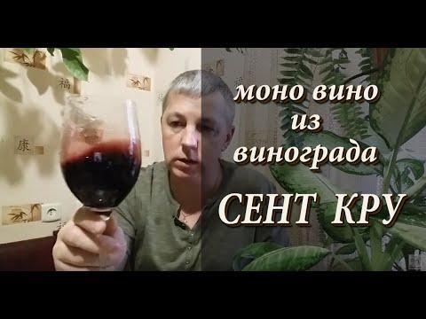 Моно вино из винограда СЕНТ КРУ!