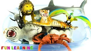 Learn Colors Wild Animals For Kids with Safari Zoo Animal Toys and Sea Creatures