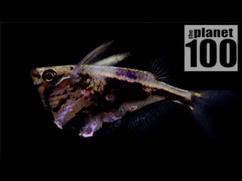 Planet 100: Top 5 Underwater Sex Acts 2/5