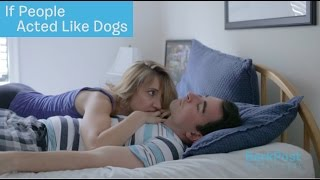 Because Dogs Save the REALLY Weird Stuff for When It's Time To Go To Bed | IF PEOPLE ACTED LIKE DOGS