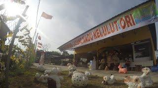 Meliponini @ Lebah Kelulut Alor Janggus ( AS-Kangar R&R unofficial )