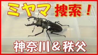 今年こそミヤマクワガタをゲットしたいぞと、神奈川と秩父へ。