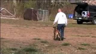 Dog Obedience Training Jay Flagg Www.stldogimprovements.com