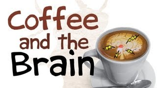 How Coffee Affects Your Brain