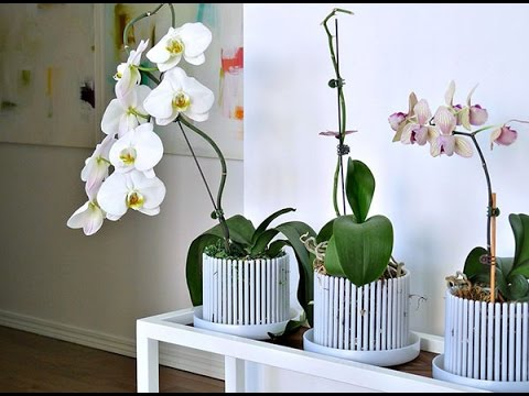 Уход за орхидеями -