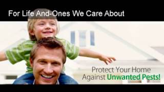 626-344-2464|Affordable Pest Control Exterminator Services Pas…
