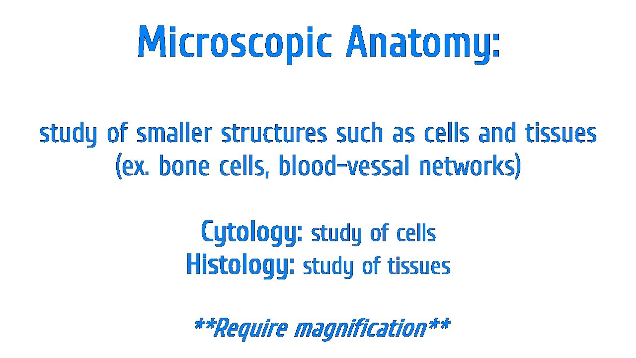 Anatomy and Physiology: Gross (macroscopic), Microscopic ...