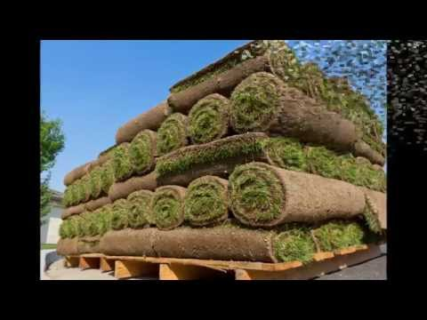 Sod In Greensboro NC, Sod Delivery In Greensboro NC, Southern SodGrass