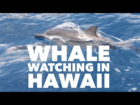 whale-watching-in-hawaii