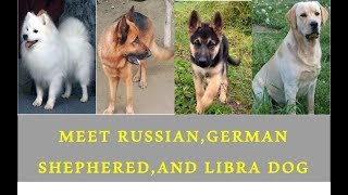 Meet German Shepherd,Russian and Libra Dogs and Puppies