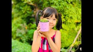 HOW | Cách trồng mạ non siêu đơn giản - Rice Sprouts Planting so easy