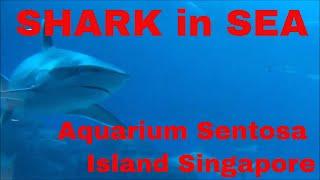 SHARK in SEA aquarium Sentosa island Singapore