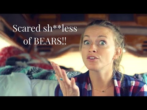 bears online dating