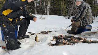 ЧУДЕСА НА ТАЕЖНОЙ РЕЧКЕ, накануне Дня Мужиков. Зимняя рыбалка 2020.
