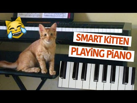 Smart Kitten Playing Piano Funny Video - Cat keyboard master 😂 😸 😻