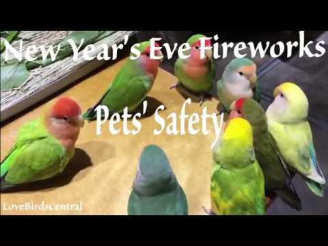 New Year's Eve Fireworks   Pets' Safety   LoveBirdsCentral ...