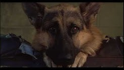 K-9 - Dooley and Jerry in the beginning