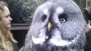 Marshall the dramatic Owl.....cute!