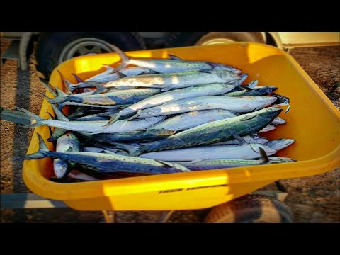 Fishing For A Living - Commercial Fishing