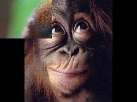 Video Divertenti Animali Scimmie Parlanti Youtube