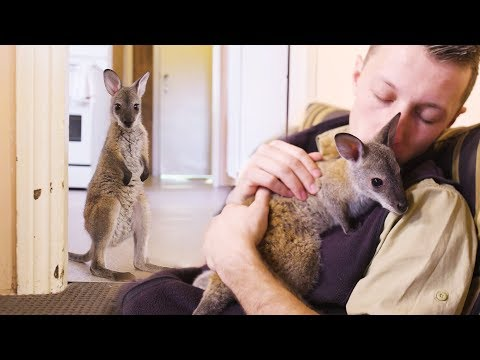 When you're best friends with a baby wallaby