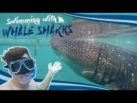Swimming with Whale Sharks - Oslob, Cebu Island (Philippines)
