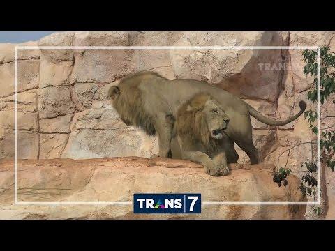 DUNIA BINATANG - BENTENG PERTAHANAN TERAKHIR (9/1/17) 3-1