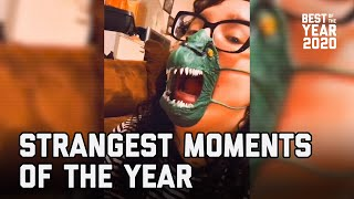 Strangest Moments of the Year (2020) | FailArmy