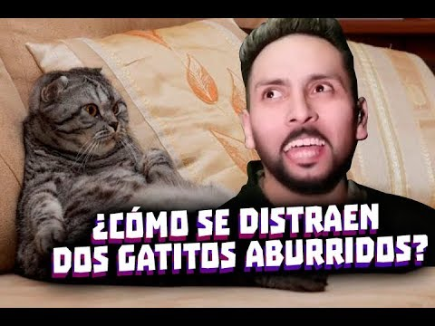 ¿CÓMO SE DISTRAEN DOS GATITOS ABURRIDOS? - MINI NOTICIERO 06-12-19