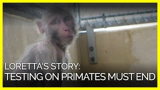 loretta-s-story-this-is-why-experiments-on-primates-must-end