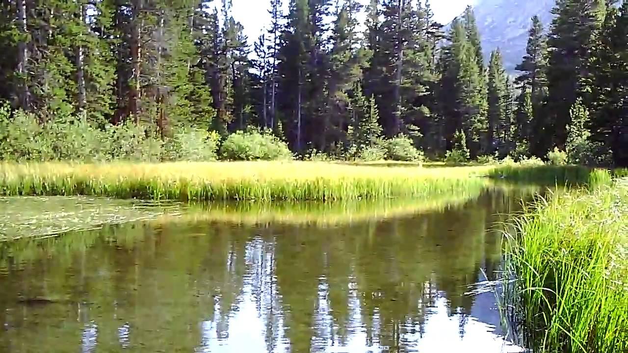 Fly fishing rock creek california youtube for Rock creek fishing report
