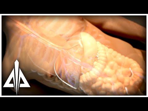 3D Medical - Anatomical Animation - Illustration -Organ Level -Trinity Animation