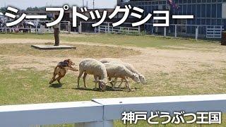 神戸市中央区『神戸どうぶつ王国』 ドッグステージで行われるハンタウェ...